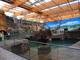 Galeria Afrykarium